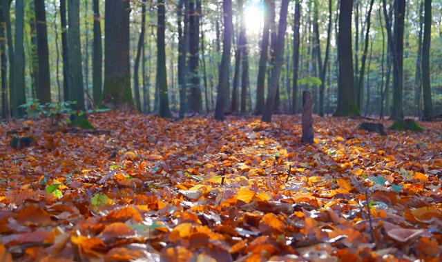 Blätter auf dem Waldboden