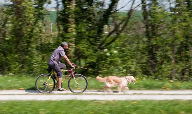 Fahrrad fahren mit dem Hund