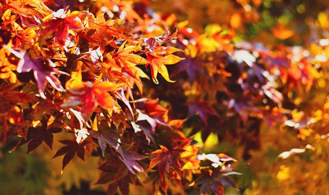 Bunte Blätter