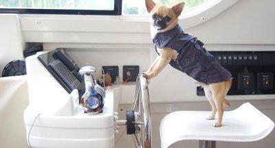 Unsere Empfehlungen für Ihre Bootsferien mit Hund