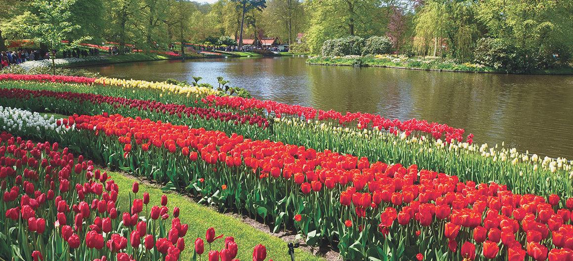 Tulpen im Keukenhof, Lisse, Niederlande